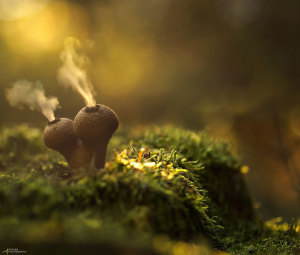 mushroom-photography-302__880